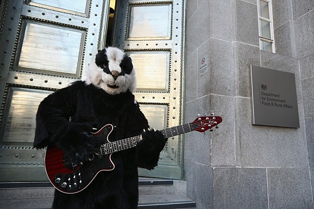 What do you think of the new song by Brian May and Slash 'The Badger Swagger'